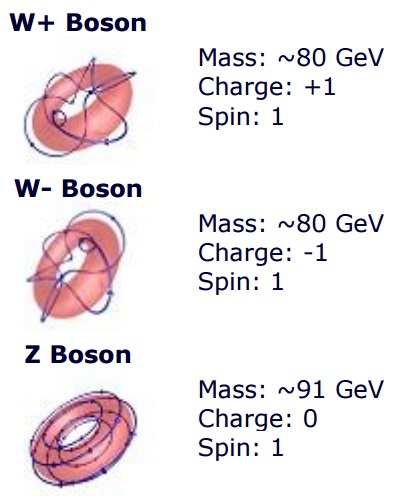 boson_w_and_z